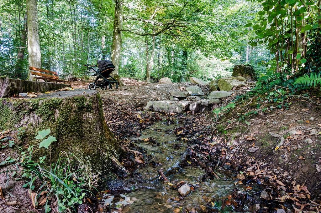 Wandern im Tettnanger Wald
