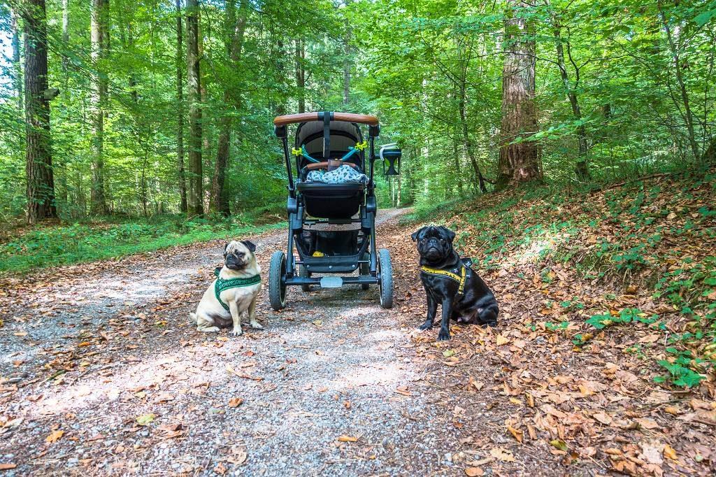 Kinderwagen- Wanderung mit Hund