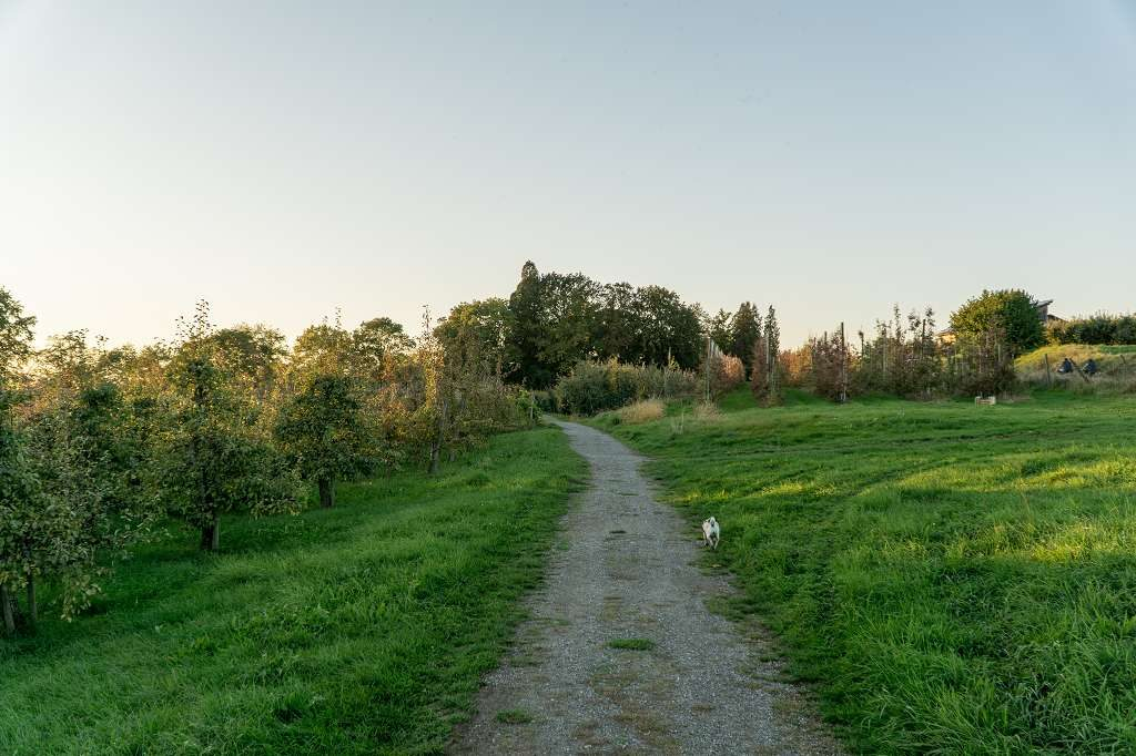 Kinderwangen-Wanderung am Bodensee