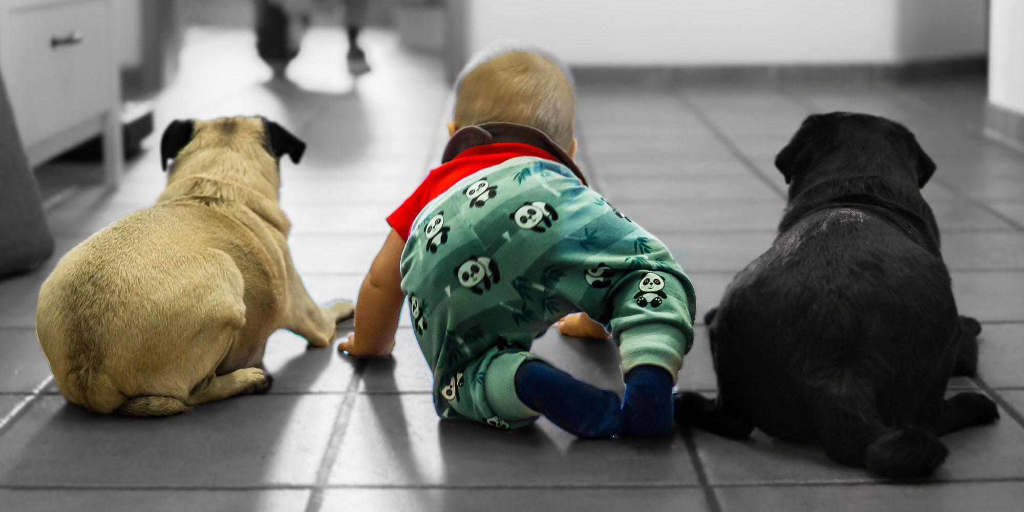 Leben mit Baby und Hunden zwischen Spucktuch und Kacktüte