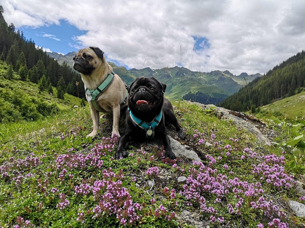 Wandern mit kleinem Hund