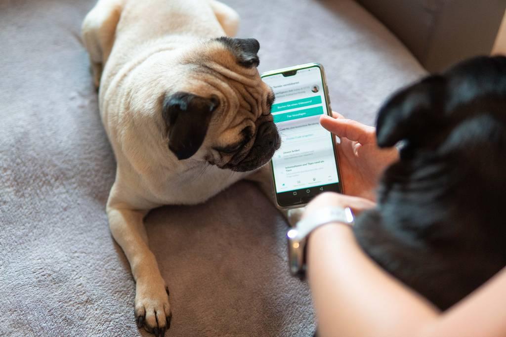 Tierarzt im Internet