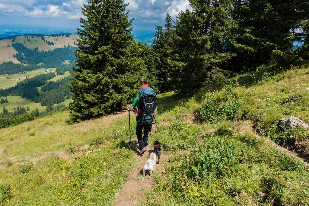 Wandern mit Hund und Kind