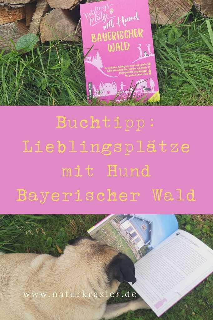 Bayerischer Wald mit Hund